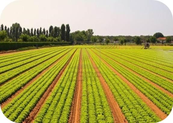 Agribusiness