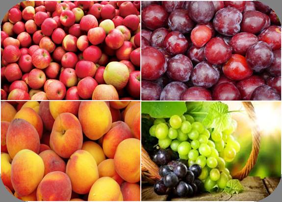 Wine & Fruit